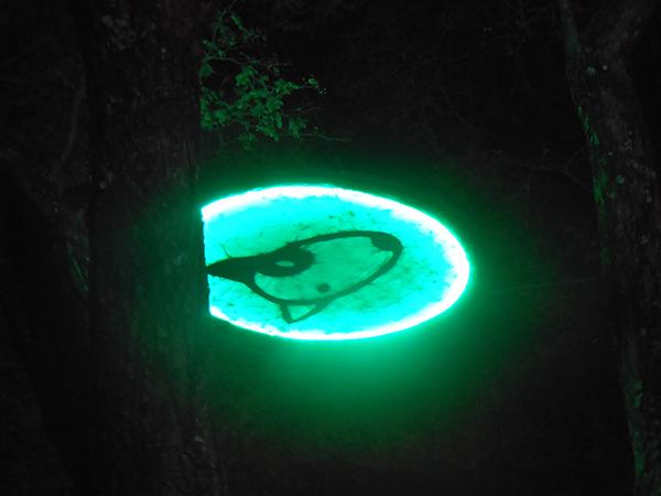 Lights at Oppikoppi.